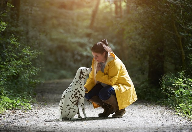 Woman with Dalmatian dog on woodland path.