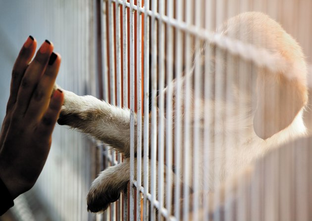 woman touching puppy's paw through bars