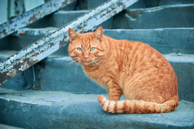 Red street cat sitting on concrete staircase
