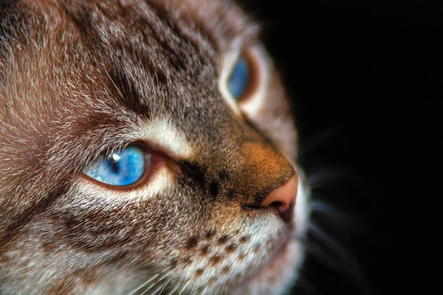 at with blue eyes against a dark background.