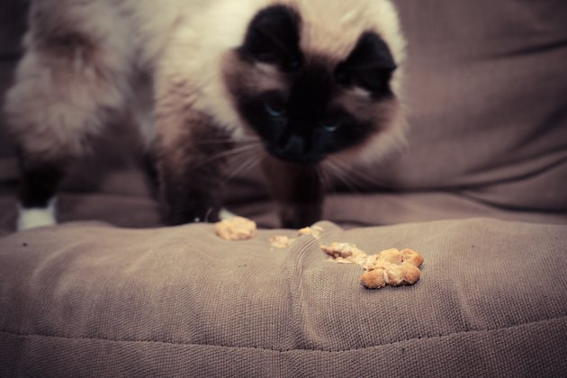 9 Things All First-Time Cat Owners Need To Know
