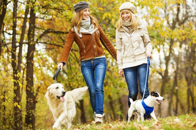 Cheerful Young Woman Walking With Dogs outdoors
