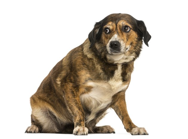Crossbreed dog sitting, looking intimidated, isolated