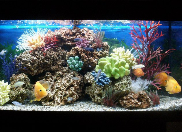 Image of marine effect tropical aquarium with parrot cichlid fish