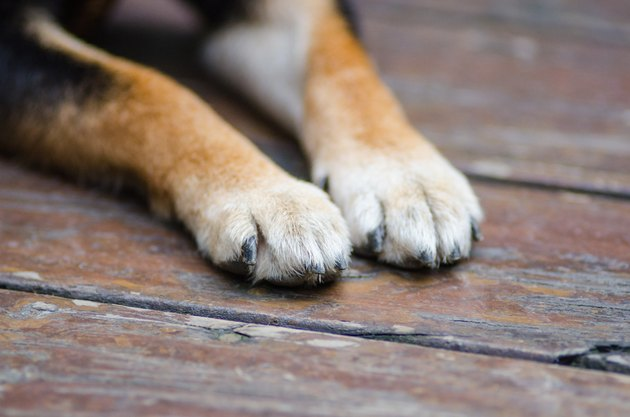 dog paws on wood deck outdoors