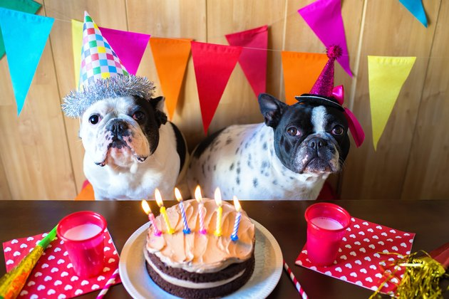 Couple of dogs on birthday party