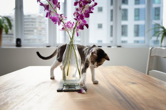 Young cat playing with a vase of flowers on a wooden table