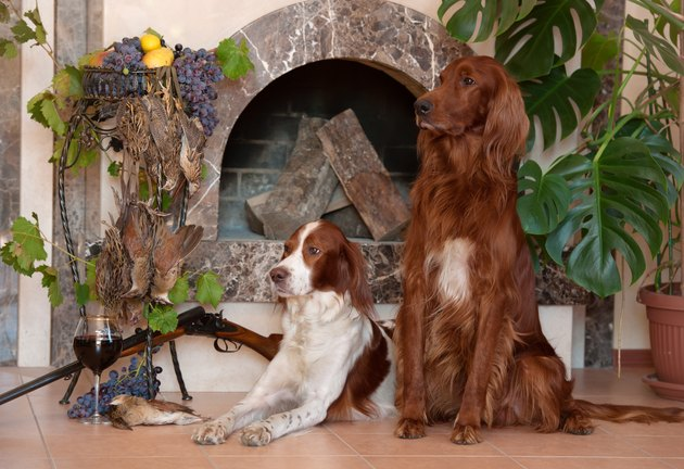 Bunch of birds, two hunting dogs and rifle on background of the fireplace.