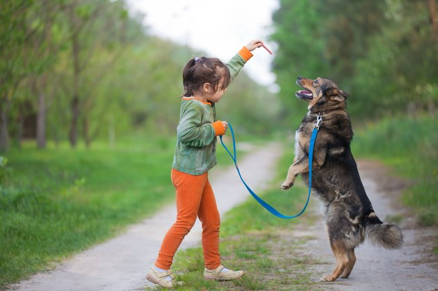 Little girl training a dog