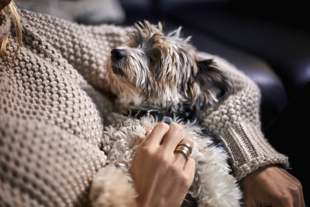 Close-up of woman cuddling with lap dog at home