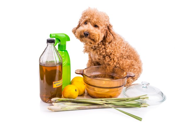 Apple cider vinegar, lemon,  lemongrass effective flea repellent