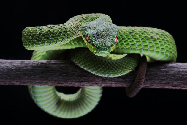 Close-Up Of Snake On Black Background