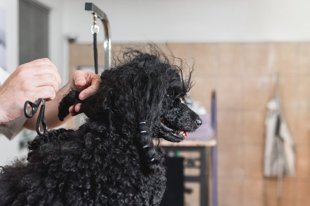 Man unraveling tangled dog's hair