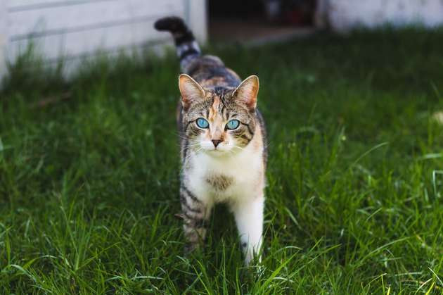 Portrait Of Cat Standing On Grassy Field