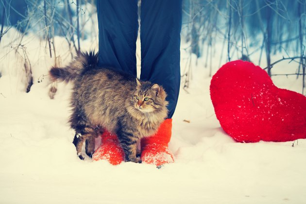 Cat rubbing against female legs in the snow