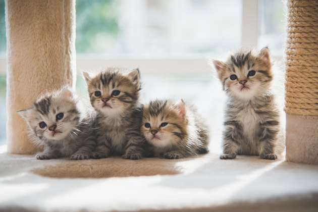Group of  kittens sitting on cat tower