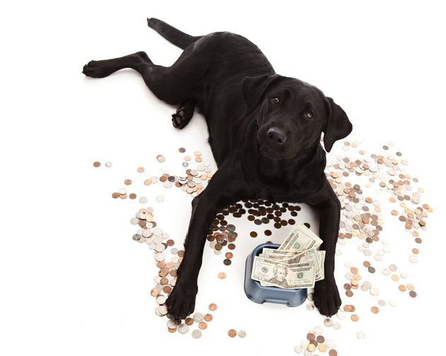 black dog surrounded by money