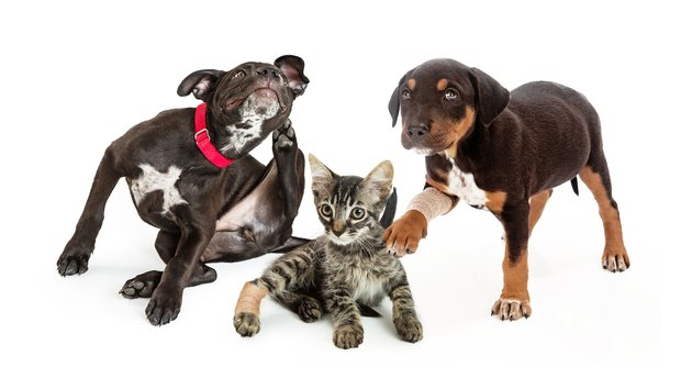 Pets Needing Veterinary Medical Care