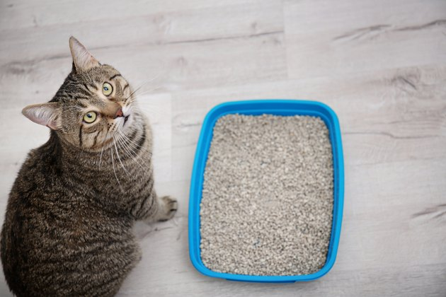 Adorable cat near litter box indoors looking up