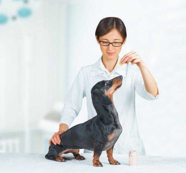 Vet holds medication for dog
