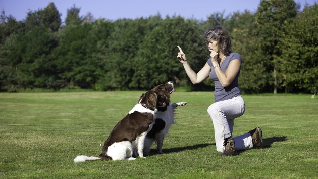 woman training her dogs with a whistle