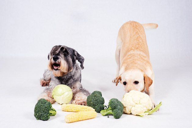Two dogs with corn, broccoli and cauliflower