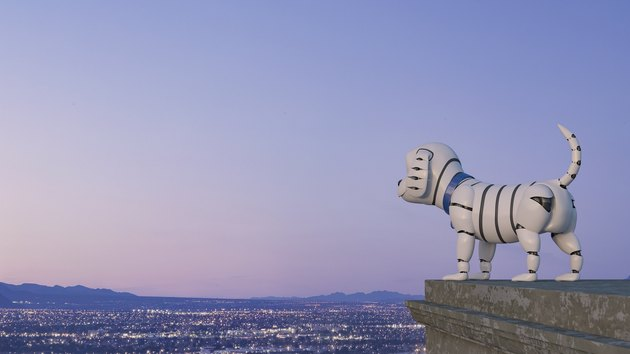 Robot dog looking at skyline at night, 3d rendering