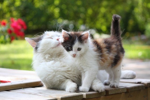 Adorable kitten resting with his mother