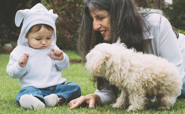 Little boy playing with his grandmother and a dog