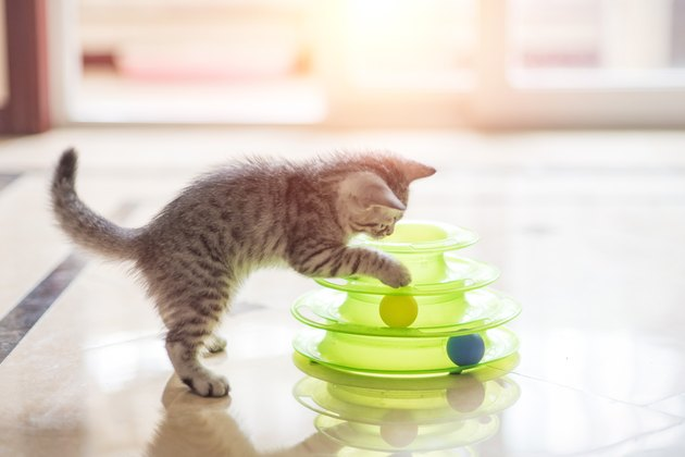 cat playing with ball toy