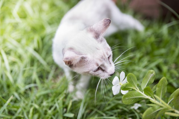 White kitten cat smells flower on grass