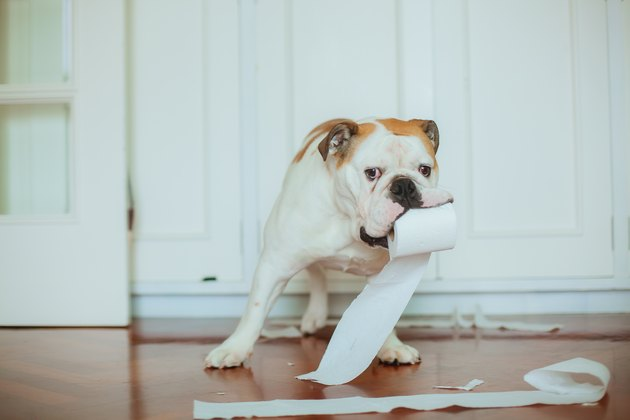 Dog playing with toilet paper on bathroom floor