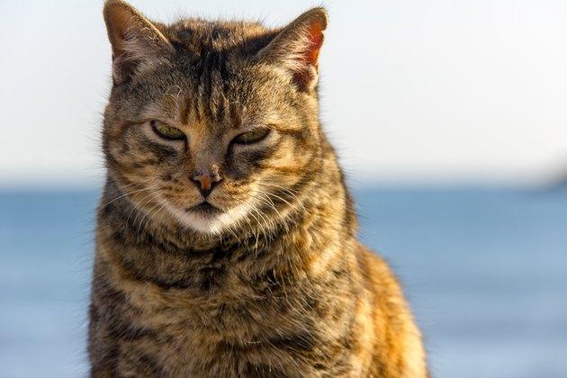 A stray cat at the port, with the sea in the background