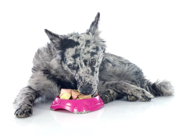 eating Hungarian dog