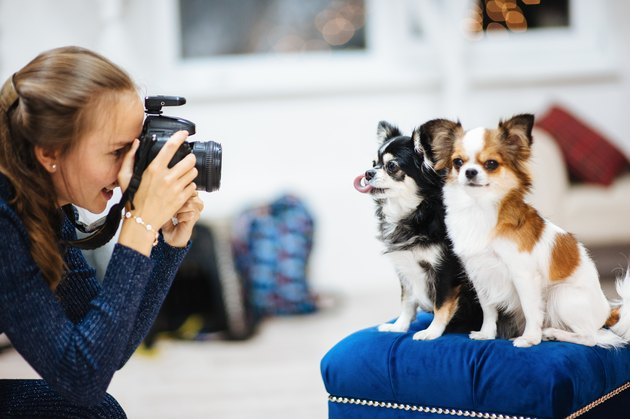beautiful girl photographer with camera taking picture of little dogs in studio