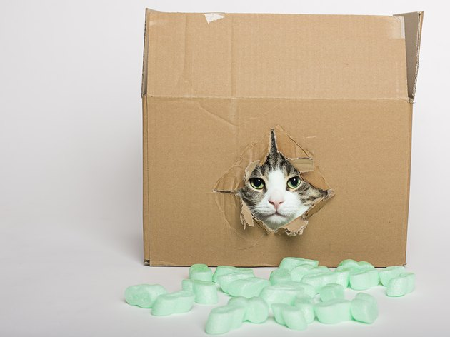 kitten in a cardboard box