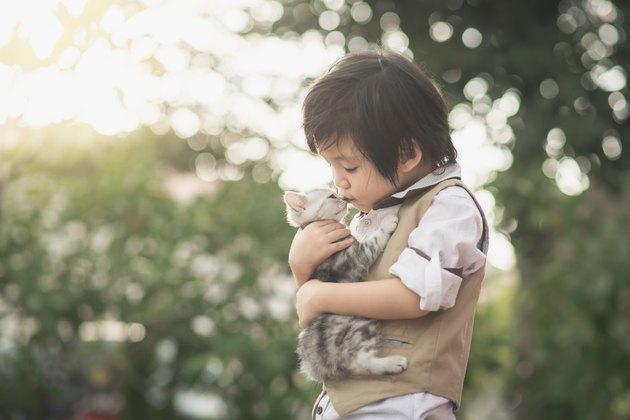 Asian boy  holding american short hair  kitten