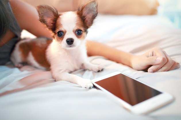 cute puppy dog with smart phone