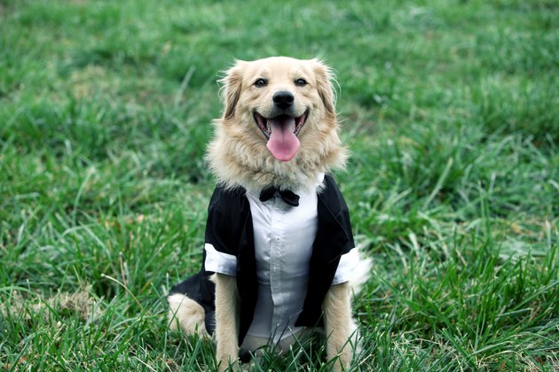 happy groom dog
