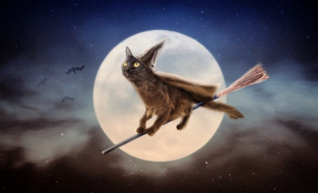 Halloween Black Cat on Broom Over Moon