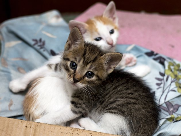 two stray kittens in a box