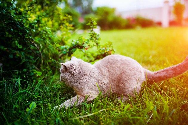 Sweet cat on green grass