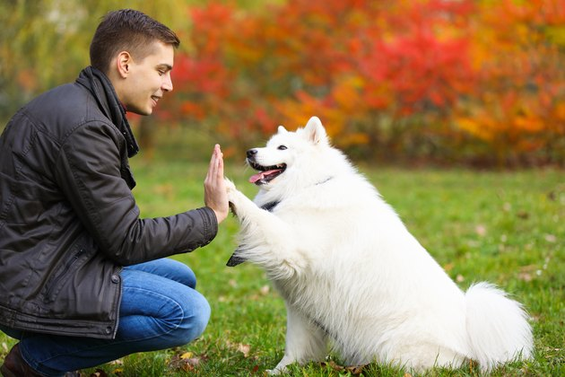 Dog giving a young man a high five