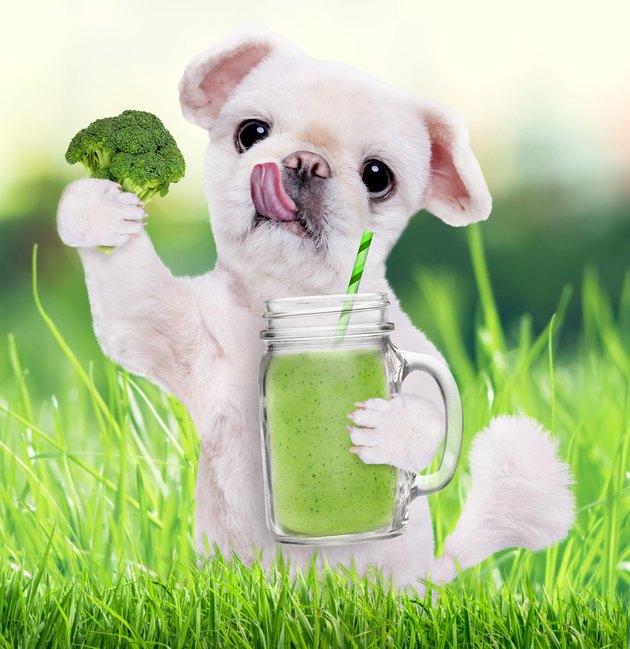 Dog holding smoothie in a mug .