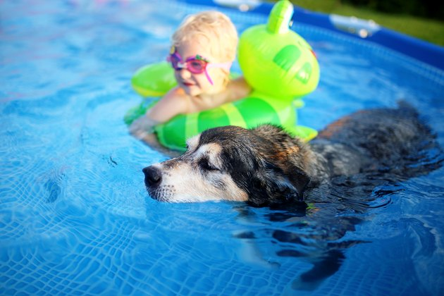 Old Loyal Pet Dog Swimming in Backyard Pool with Baby Girl in Floatie