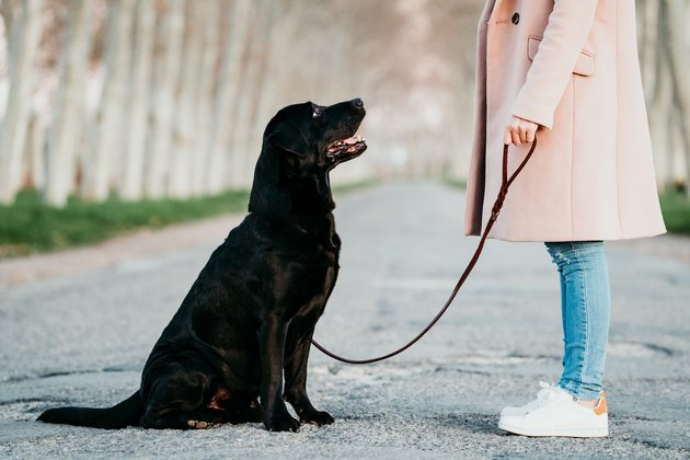 unrecognizable young owner woman and her black labrador dog sitting at sunset outdoors