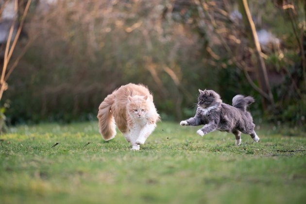 playing cats on grass