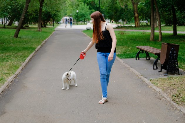 Young girl is walking with her dog on a retractable leash on asphalt sidewalk. Little white puppy Husky 2 months old in summer park.