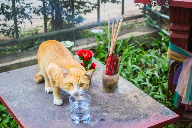 Cat drinking water front of house