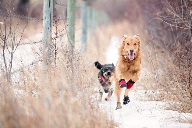 Dogs running in winter